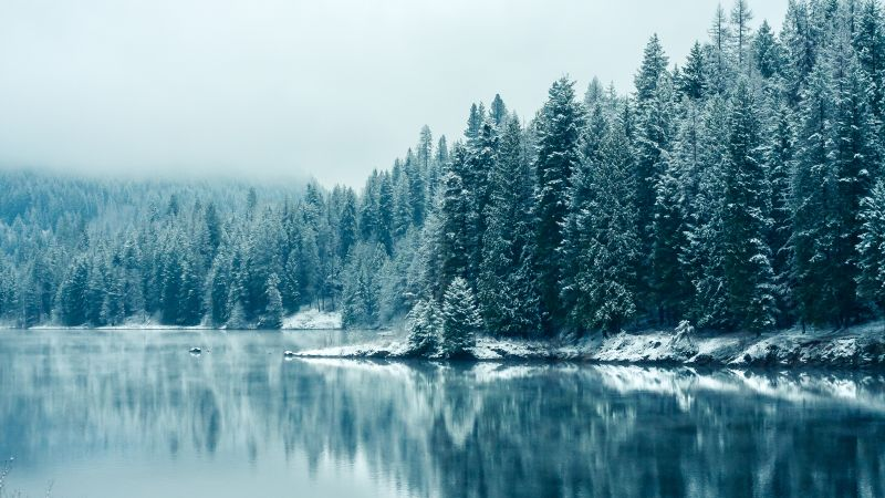 Kootenay River, Snow fall, British Columbia, Canada, Forest, Winter, Snowy Trees, Mirror Lake, Reflection, Landscape, Misty, Early Morning, Wallpaper