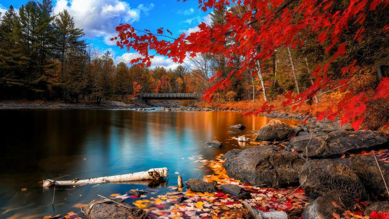 Autumn Forest, Maple trees, Lake, Wooden bridge, Autumn leaves, Fallen Leaves, Long exposure, Reflection, Blue Sky, Landscape, Scenery, Wallpaper