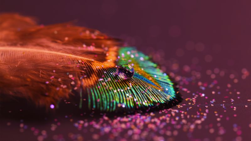 Peacock feather, Aesthetic, Water drop, Selective Focus, Macro, Close up, Blur background, Wallpaper