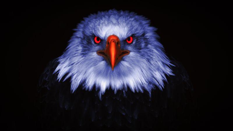 Eagle, Bird of prey, Raptors, Red eyes, Black background, 5K, 8K, Wallpaper