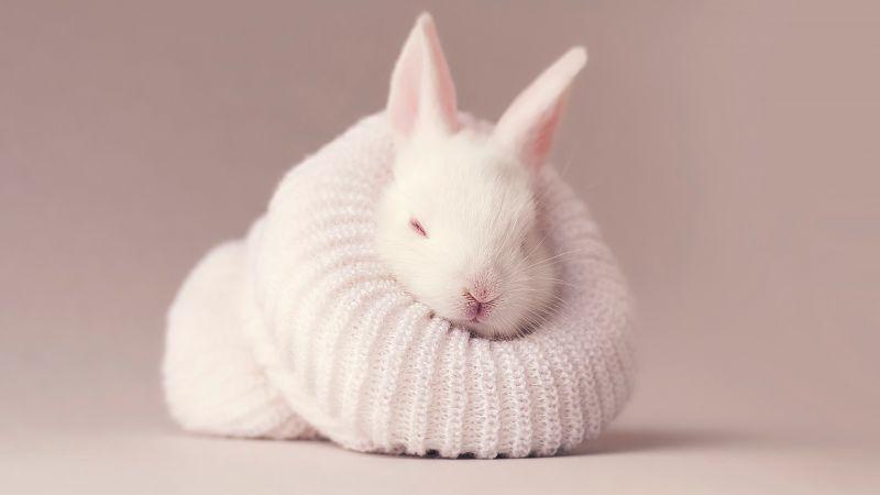 White rabbit, Newborn, Baby bunny, Sock, Cute bunny, Aesthetic, Wallpaper