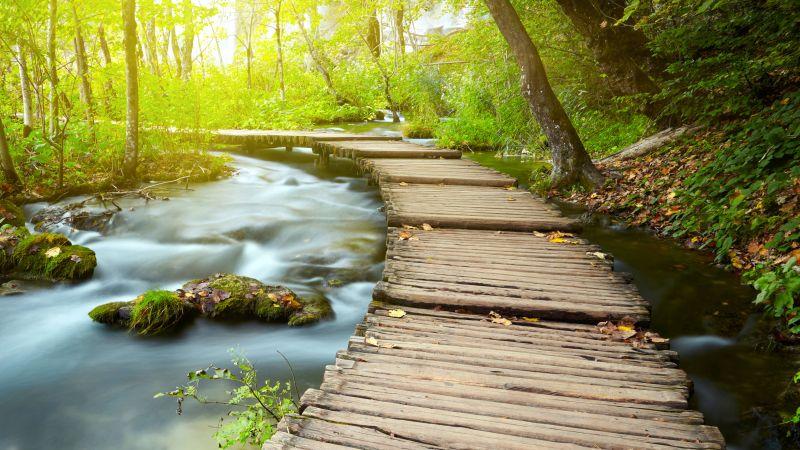 Wooden pier, Forest, Green Trees, Water Stream, Long exposure, Greenery, Woods, Scenery, 5K, 8K, Wallpaper