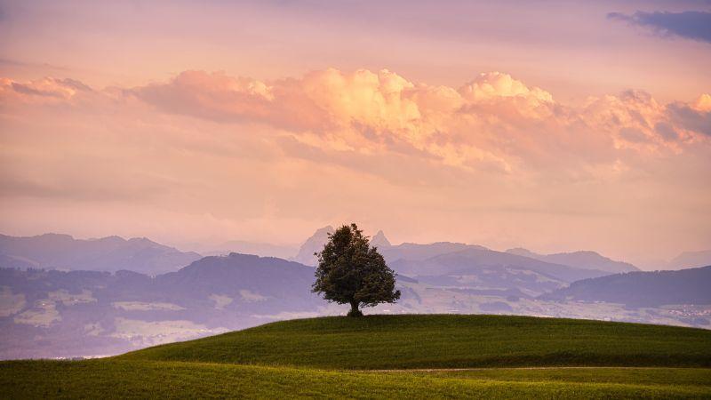 Solitude Tree, Green Meadow, Landscape, Cloudy Sky, Mountains, Wallpaper