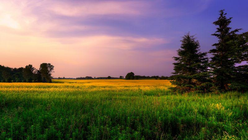 Farm Land, Green Fields, Purple sky, Landscape, Meadow, Pine trees, Wallpaper