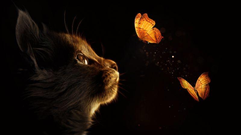 Kitten, Cat, Butterflies, Black background, Glowing, Manipulation, Closeup, Cute Cat, Wallpaper