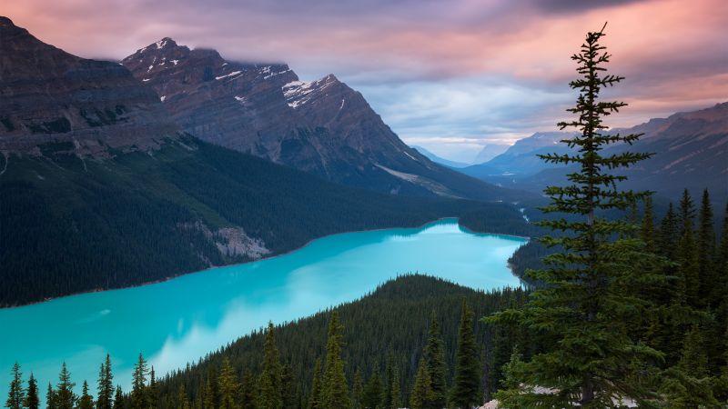 Peyto Lake, Mountains, Turquoise, Evening, Sunset, Canada, Wallpaper