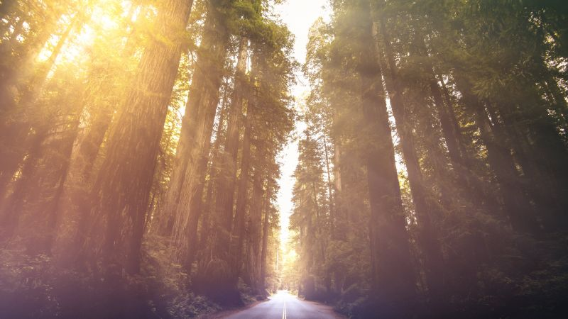 Redwoods National Park, California, Woods, Morning sun, Sun rays, Empty Road, Landscape, Scenery, 5K, Wallpaper