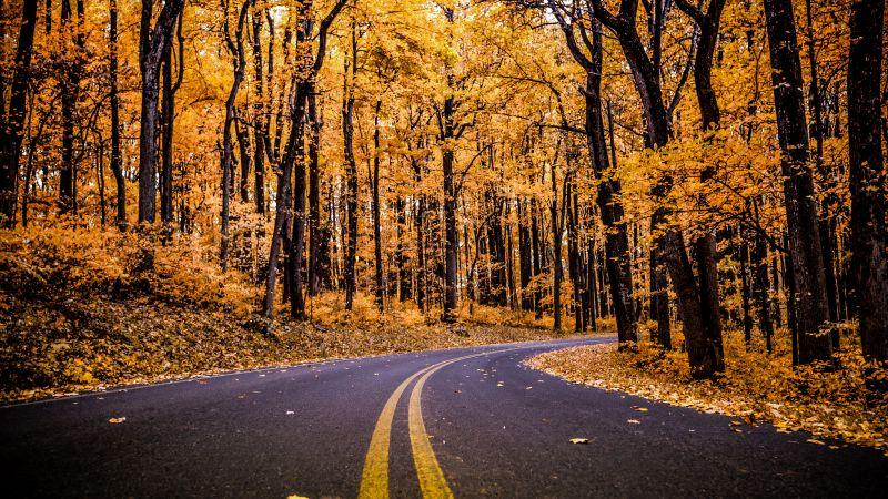 Shenandoah National Park, Virginia, United States, Autumn trees, Autumn, Fall, Empty Road, Early Morning, Landscape, Scenery, Beautiful, 5K, Wallpaper
