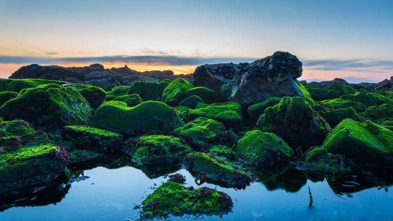 Seashore, Green Rocks, Sunset, Wallpaper