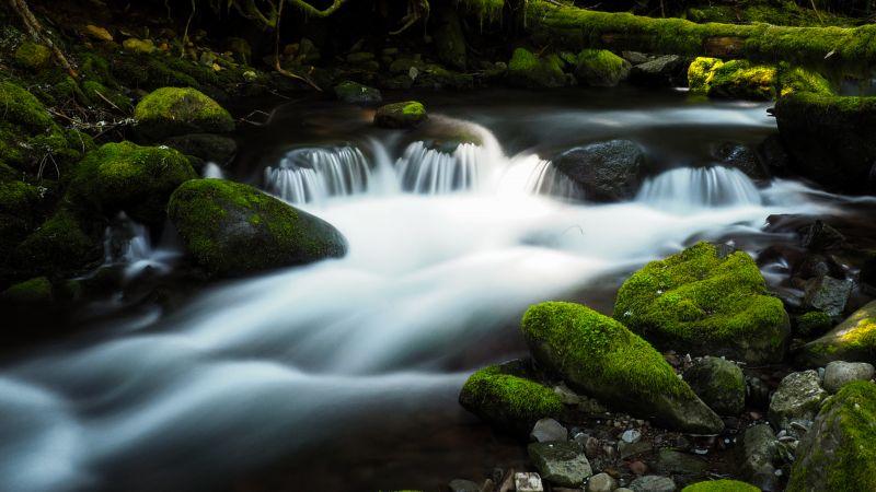 Bear Creek, Colorado, River Stream, Green Moss, Rocks, Water flow, Long exposure, Landscape, Greenery, Wallpaper
