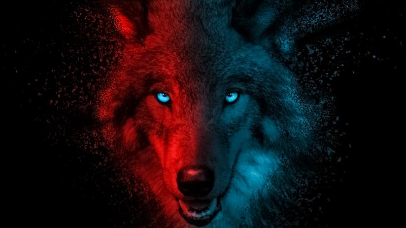 Wolf, Scary, Gradient, Dark background, Wallpaper