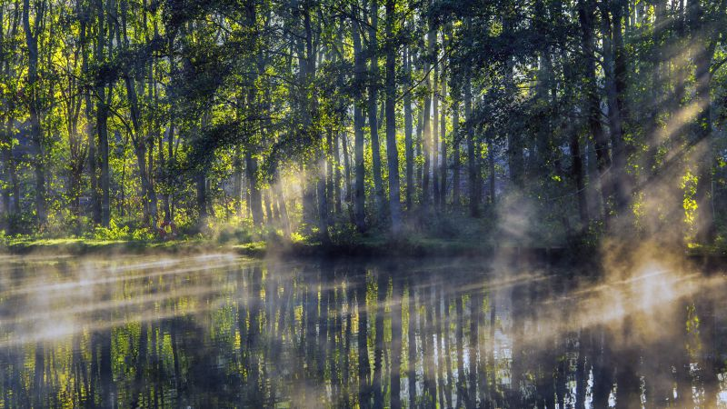 Woodland, Forest, Worcestershire, Early Morning, Pond, Sun light, Fog, Reflection, Scenery, 5K, 8K, Wallpaper