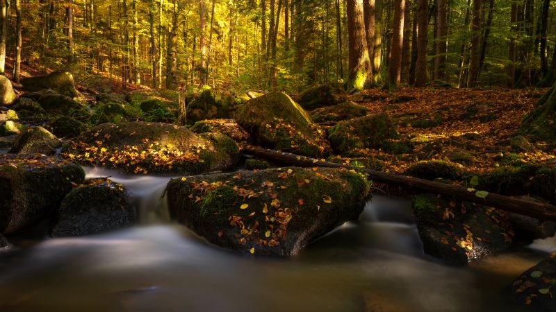 Forest, Autumn, Fall Foliage, Autumn leaves, Water stream, Bavaria, Germany, Wallpaper