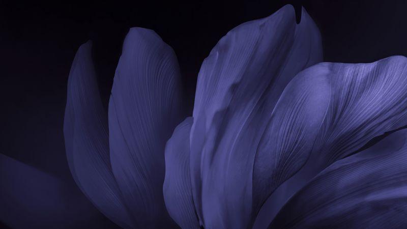 Vivo Stock, Flower, Black background, Dark, Android 10, Wallpaper
