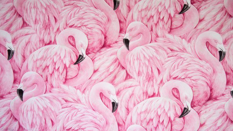 Pink Flamingos, Painting, Feathers, Beautiful, Aesthetic, 5K, Wallpaper