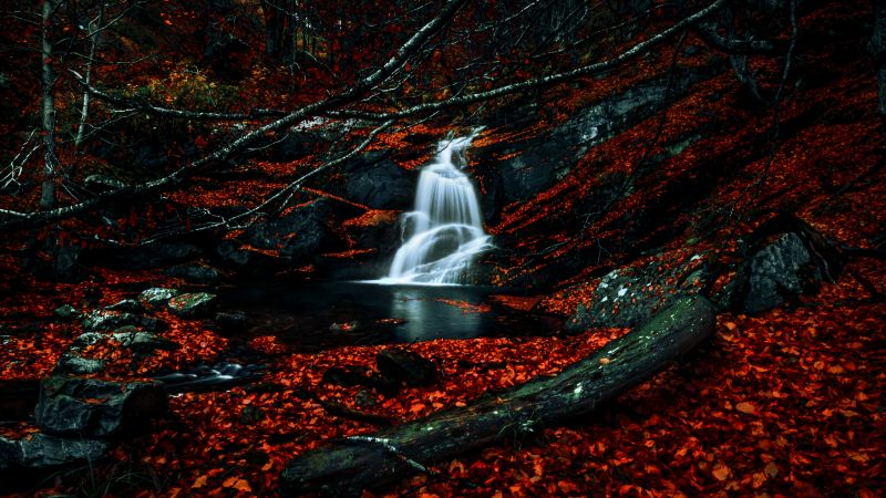 Waterfalls, Autumn, Dark Forest, Foliage, Woods, Red leaves, Fallen Leaves, Water Stream, Scenic, 5K, Wallpaper