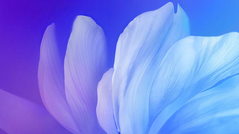 Blue flower, Gradient, Vivo Stock, Android 10, Wallpaper