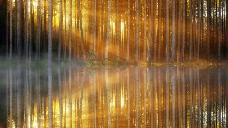 Woodland, Forest Trees, Sun light, Mist, Body of Water, Reflection, Sunset, Mirror Lake, Scenic, 5K, Wallpaper