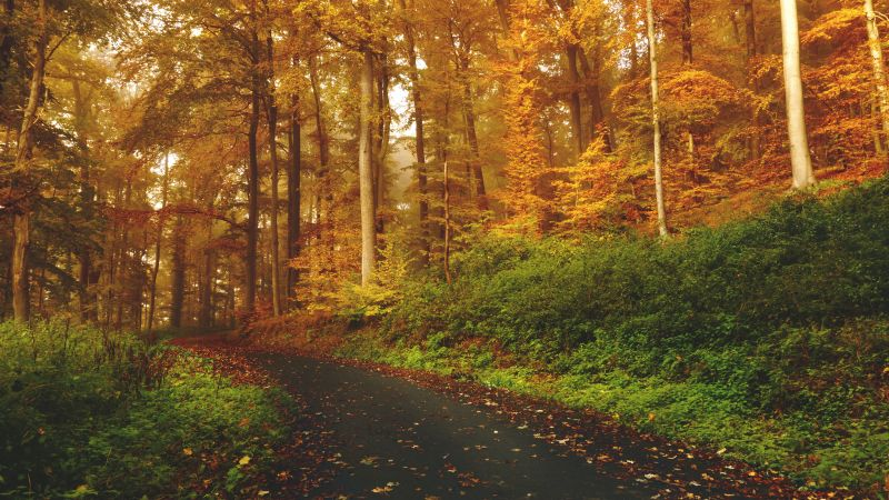 Autumn, Path, Road, Foliage, Trees, Forest, Fall, 5K, Wallpaper