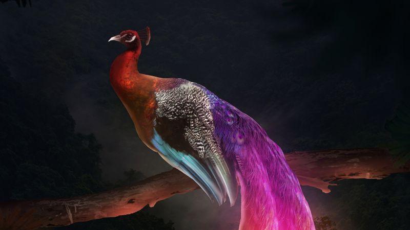 Peacock, Mythical, Fantasy, Digital Art, Wallpaper
