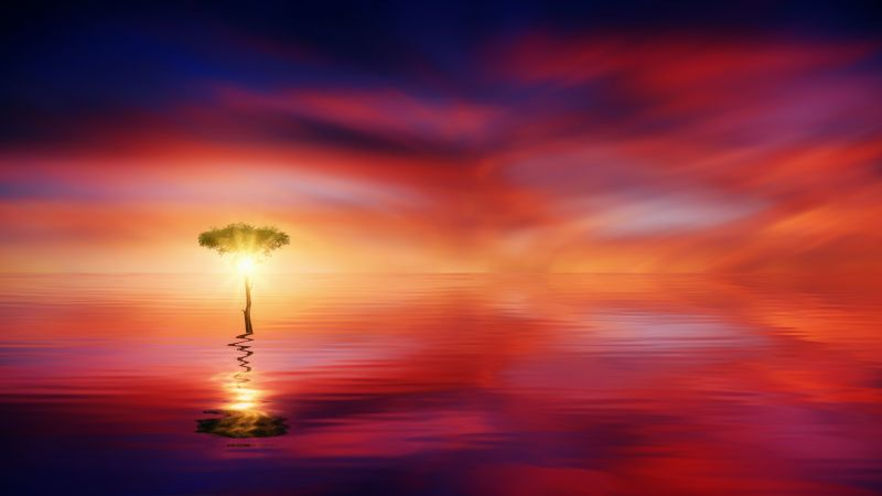 Tree, Seascape, Ocean, Sunrise, Dawn, Wallpaper