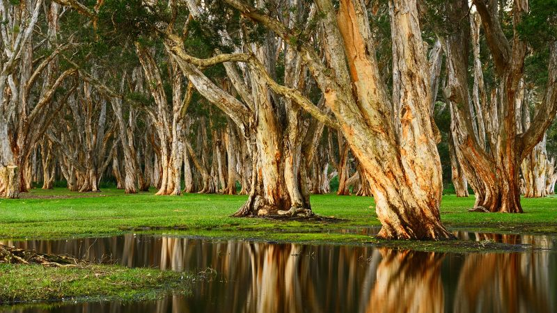 Centennial Park, Forest, Rainy day, Swamp, Australia, Wallpaper