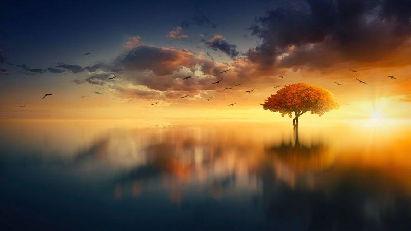 Tree, Sunrise, Birds, Reflection, Seascape, Aesthetic, 5K, Wallpaper