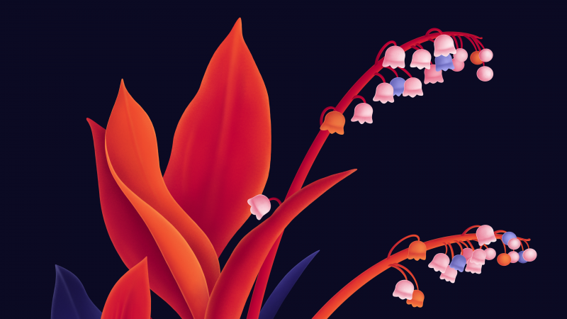 Lily flowers, Digital Art, Dark background, Vivid, Orange, Wallpaper