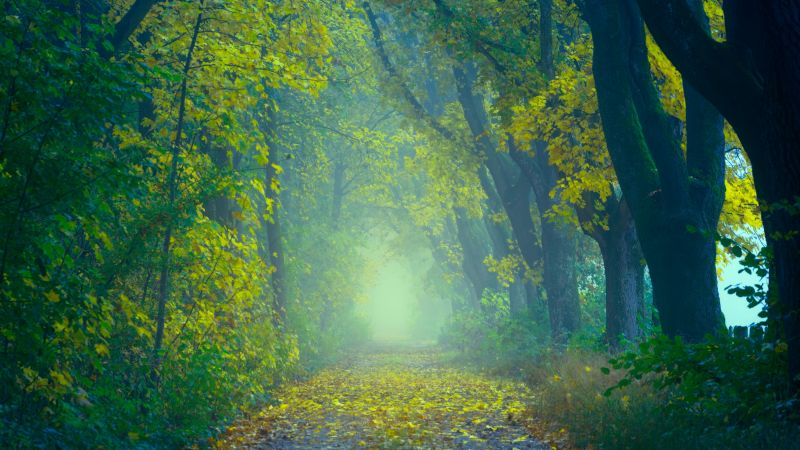 Forest, Path, Foggy, Foliage, Spring, Yellow leaves, Green, 5K, Wallpaper