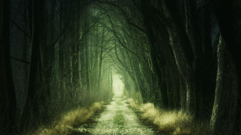 Forest, Path, Fall, Calm, Green, 5K, Wallpaper