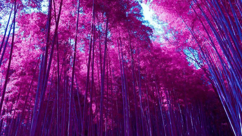 Arashiyama Bamboo Grove, Bamboo Forest, Infrared, Kyoto, Japan, Wallpaper