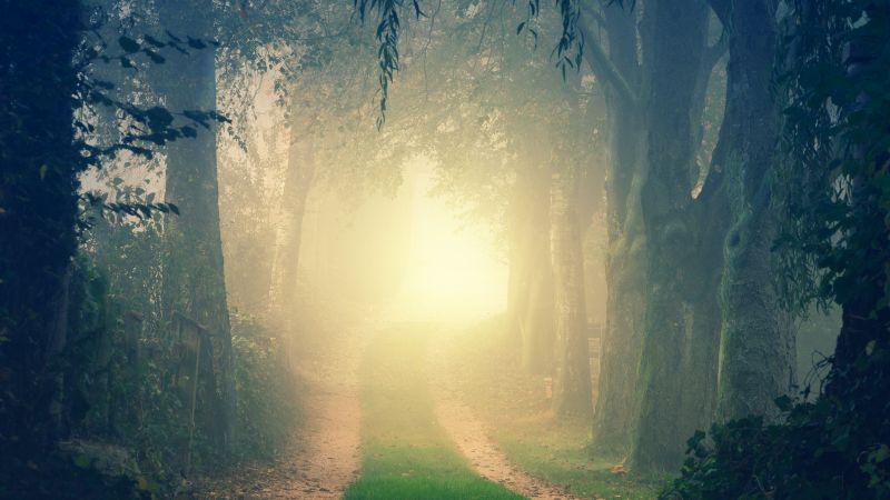 Forest, Path, Foggy, Morning, Light, Fall, Mist, 5K, Wallpaper