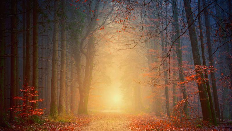 Forest, Autumn, Foggy, Dawn, Pathway, Road, Fall Foliage, 5K, Wallpaper