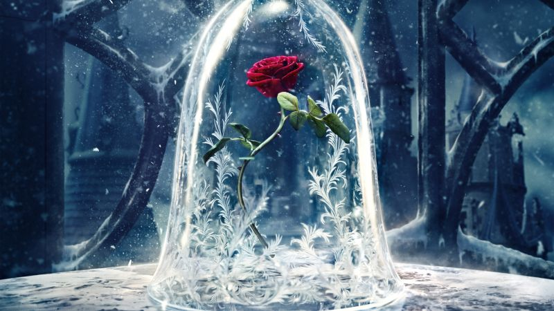 Rose, Beauty and the Beast, 5K, Wallpaper