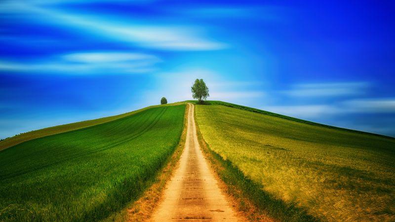 Landscape, Green, Path, Countryside, Daytime, Summer, 5K, Wallpaper
