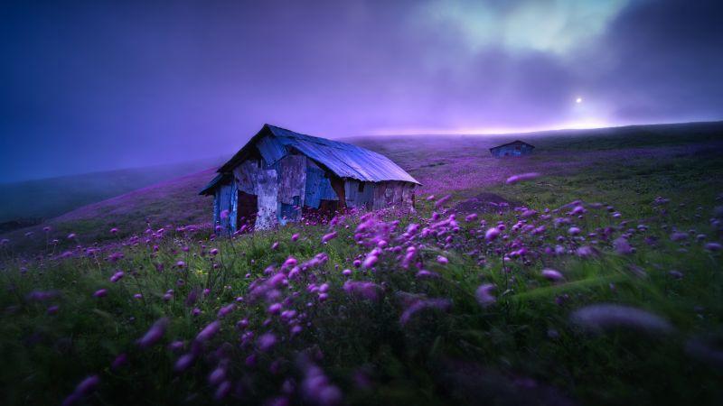 Landscape, Spring, Violet flowers, Scenic, Morning, Fog, Scenery, 5K, 8K, Wallpaper