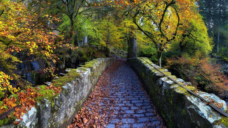 Old Bridge Over River Braan, Hermitage, Dunkeld, Scotland, Autumn trees, Fallen Leaves, Scenery, Pathway, 5K, Wallpaper