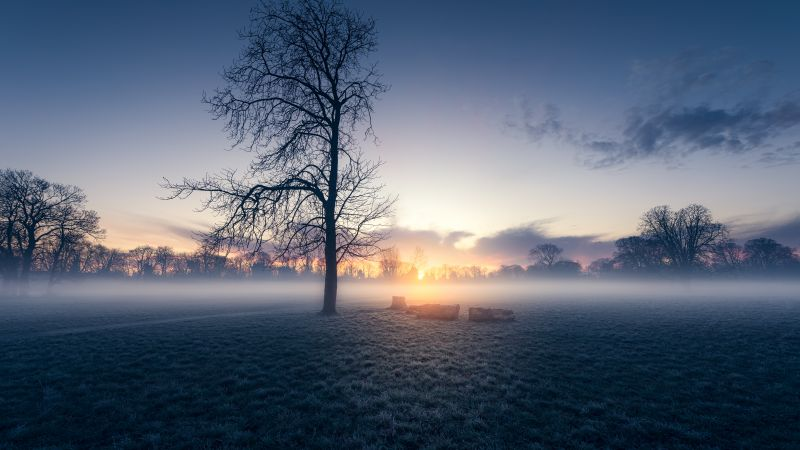 Sunrise, Trees, Silhouette, Early Morning, Morden Hall Park, London, England, Mist, Foggy, Winter, Landscape, Meadow, 5K, 8K, Wallpaper