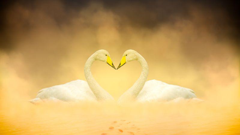 White Swan, Love Birds, Heart shape, Autumn leaves, Yellow, Digital composition, Wallpaper