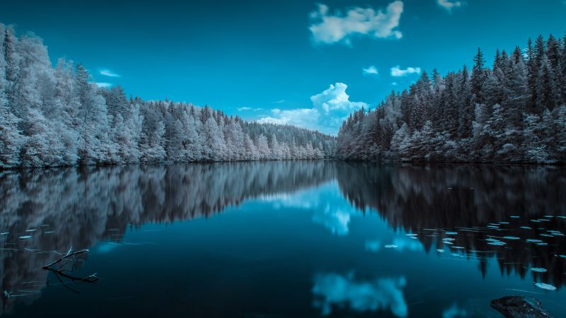 Forest, Infrared vision, Blue Sky, Mirror Lake, Reflection, Body of Water, Landscape, Pine trees, 5K, 8K, Wallpaper