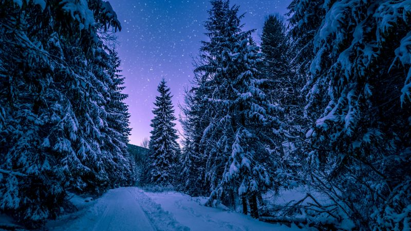 Snowy Trees, Winter, Forest, Frozen, Snow covered, Night sky, Pine trees, Seasons, Wallpaper