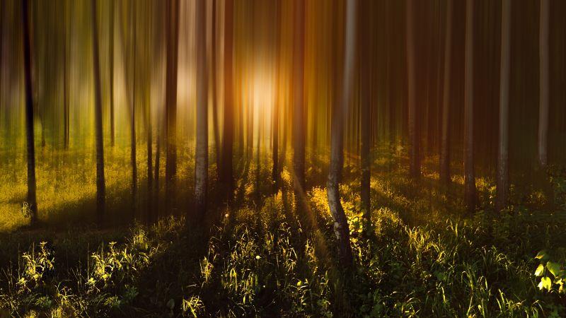 Forest Trees, Sunlight, Sunrise, Woods, Shadow, Blurred, Long exposure, 5K, Wallpaper
