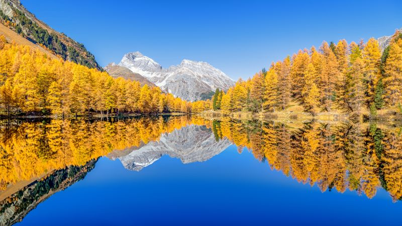Lai da Palpuogna, Autumn trees, Mountain lake, Reflection, Albula Pass, Clear sky, Landscape, Scenery, 5K, Wallpaper