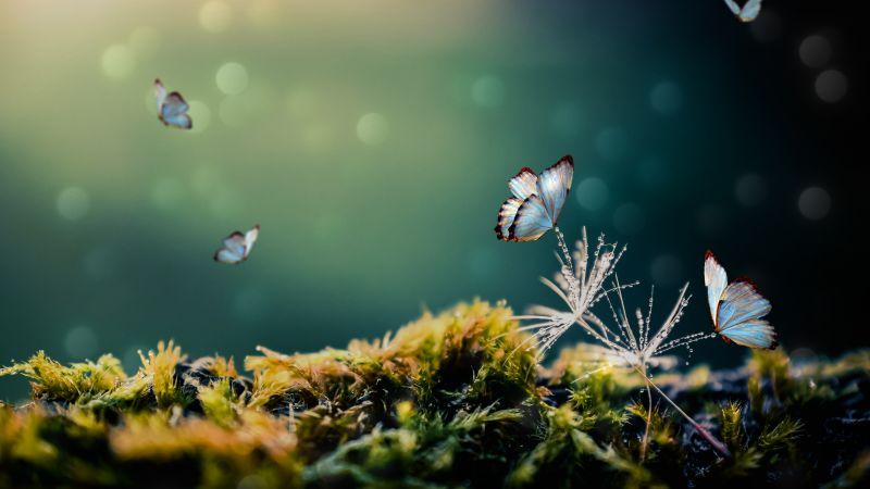 White Butterflies, Mystical Forest, Moss, Blur background, Selective Focus, 5K, Wallpaper