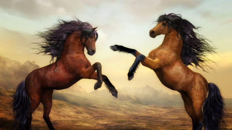 Wild Horses, Pair, Brown Horses, Stallion, Digital paint, Mane, Beautiful, Wallpaper
