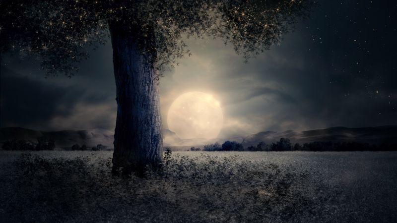 Full moon, Night view, Landscape, Surreal, Fairy tale, Wood, Mystic, Trunk, Wallpaper