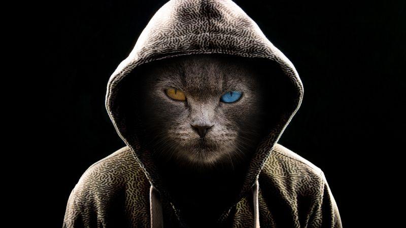 Scary Cat, Hoodie, Animal Portrait, Black background, Pet, Wallpaper