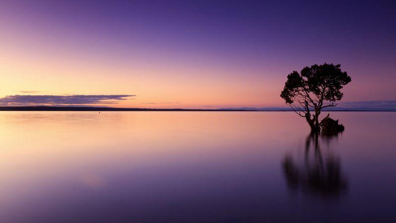 Tree Silhouette, Sunset, Horizon, Body of Water, Dusk, Reflection, Purple sky, 5K, Wallpaper