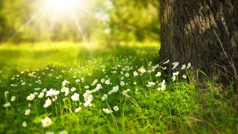 Tree Trunk, Meadow, Greenery, Sunlight, White flowers, Selective Focus, Grass, Wood, Wallpaper