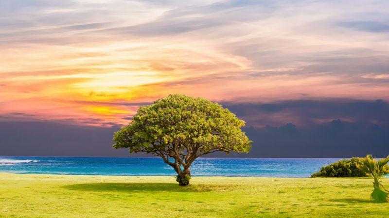 Green Tree, Ocean view, Grassland, Summer, Sunset, Horizon, Landscape, Scenery, 5K, Wallpaper